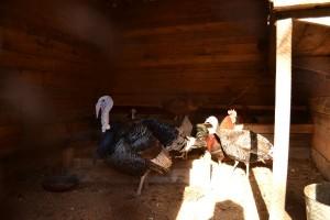 Птицы в сборе